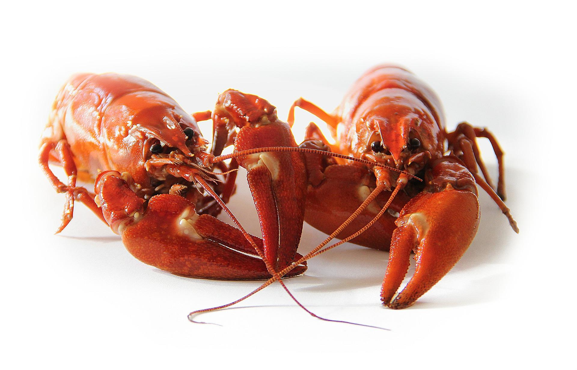 crayfish-423251_1920